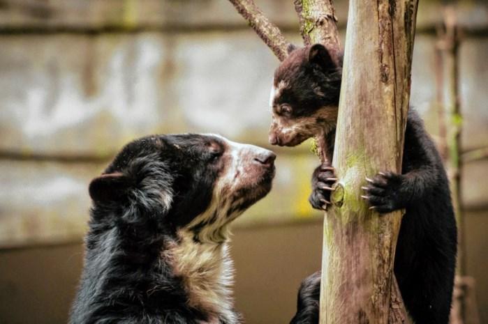 Zoo en Planckendael opnieuw in docureeks