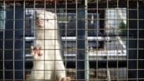 Dagelijks 4 meldingen van dierenmishandeling