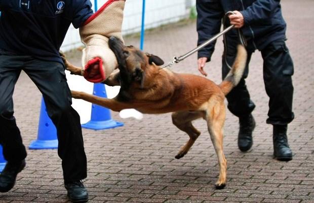 politiehond helpt inbrekers klissen