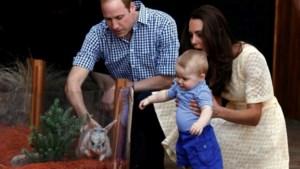 Baby George steelt de show in de zoo van Sydney