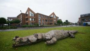 Krokodil maakt buurt onveilig