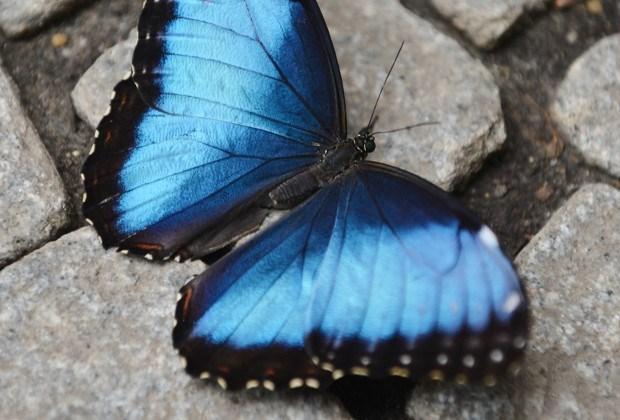 Tiental zeldzame vlinders ontsnapt uit Zoo