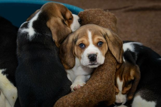 Malafide handel in jonge hondjes bloeit in Zuid-Nederland