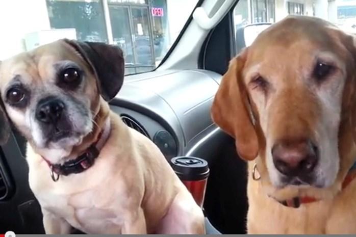 Hilarische video: dit gebeurt er als twee honden een ijsje krijgen